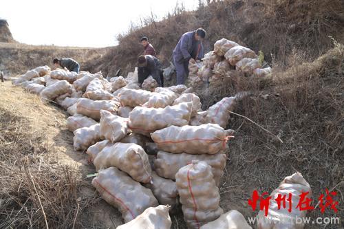 静乐促进扶持农村种植产业经济发展-忻州v农村扶桑视频虎图片